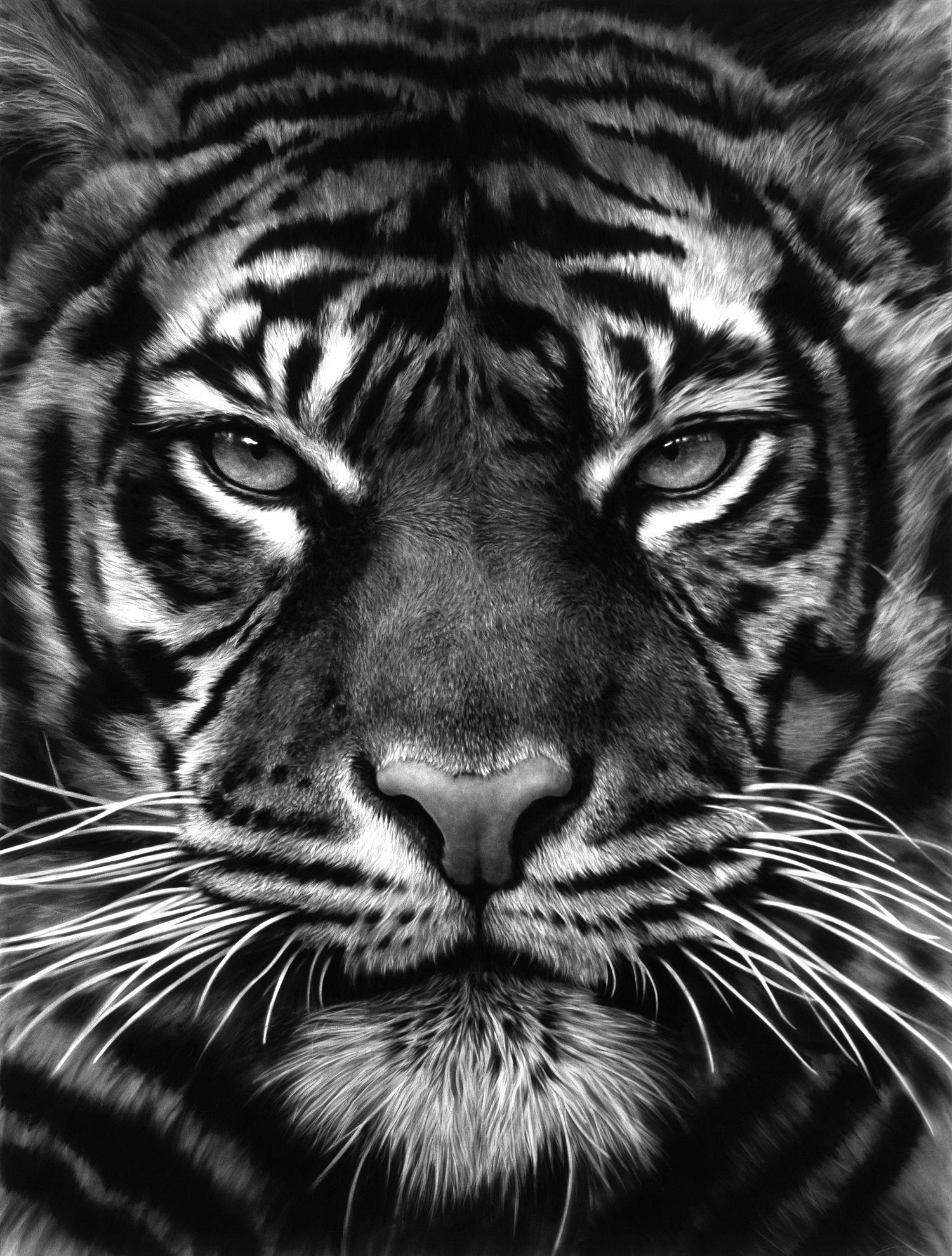 Pin by tarnz on tigers big cats lions pinterest tiger tattoo