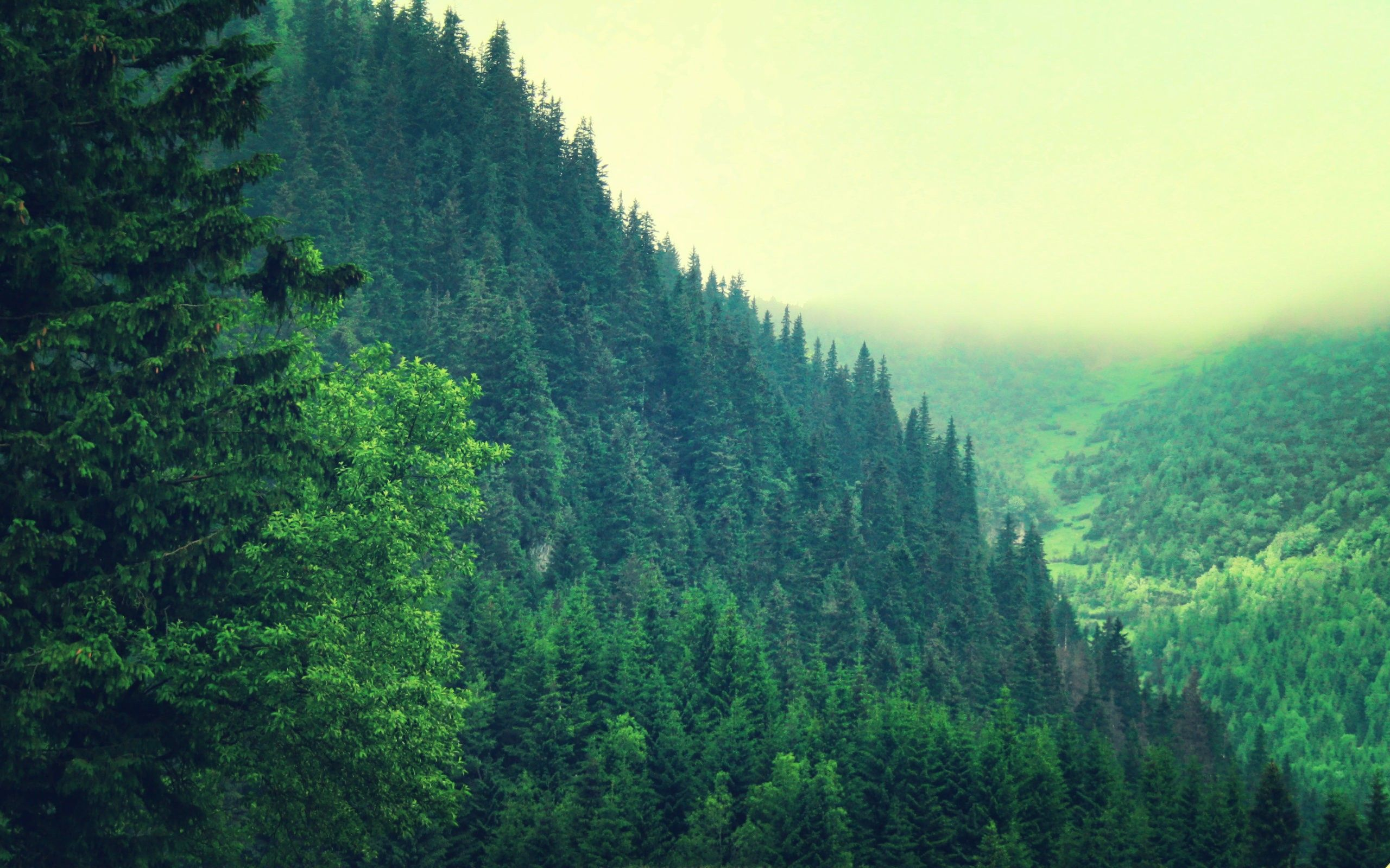 Pine Forest Background Images Attachment 4873 - HD Wallpapers Site | Backgrounds | Forest ...