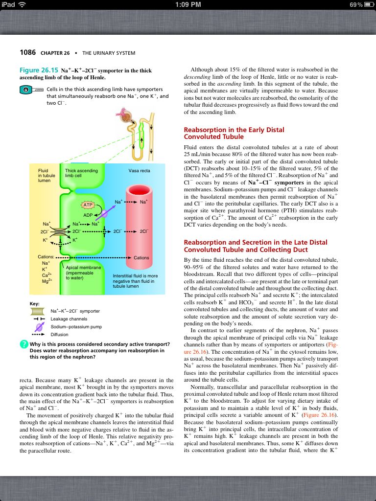 Principles of Anatomy and Physiology, Chapter 26, The Urinary System ...