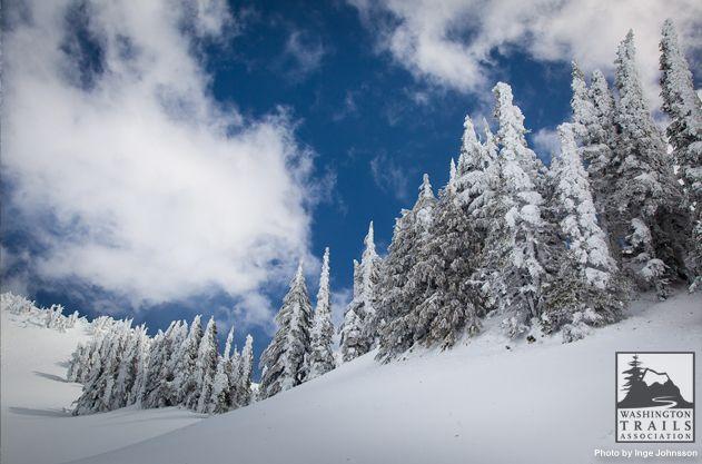 Mazama Ridge. Photo by Inge Johnsson.