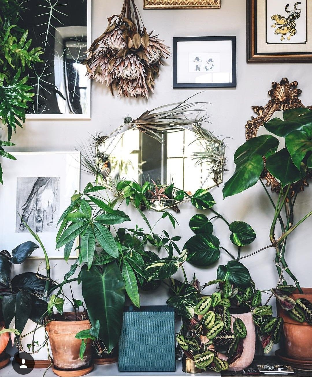 Pin By Emily Schwartz On Home House Plants Decor Mexican Home Decor House Plants Indoor