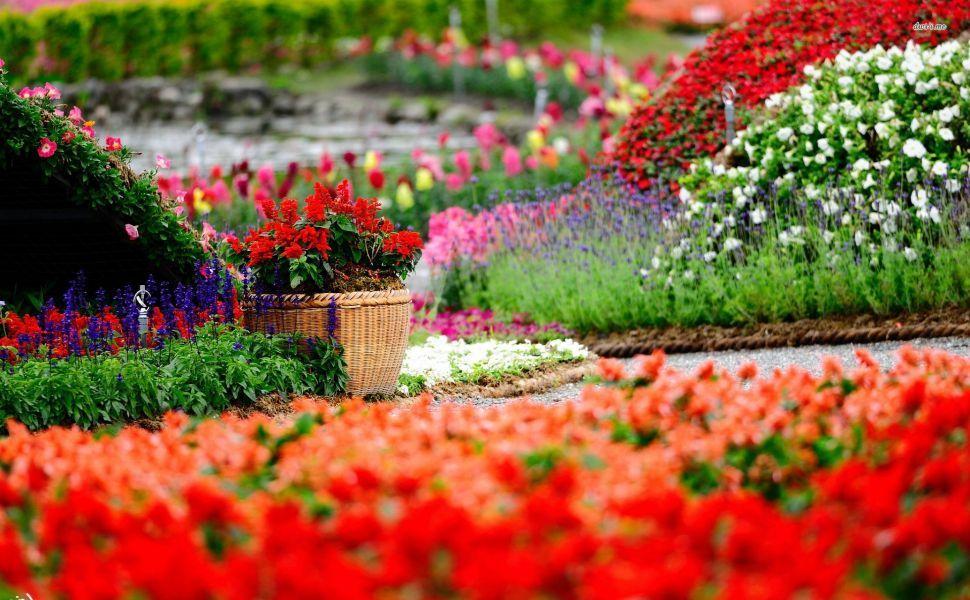 Colorful Flower Garden Hd Wallpaper Garden Pictures Flower