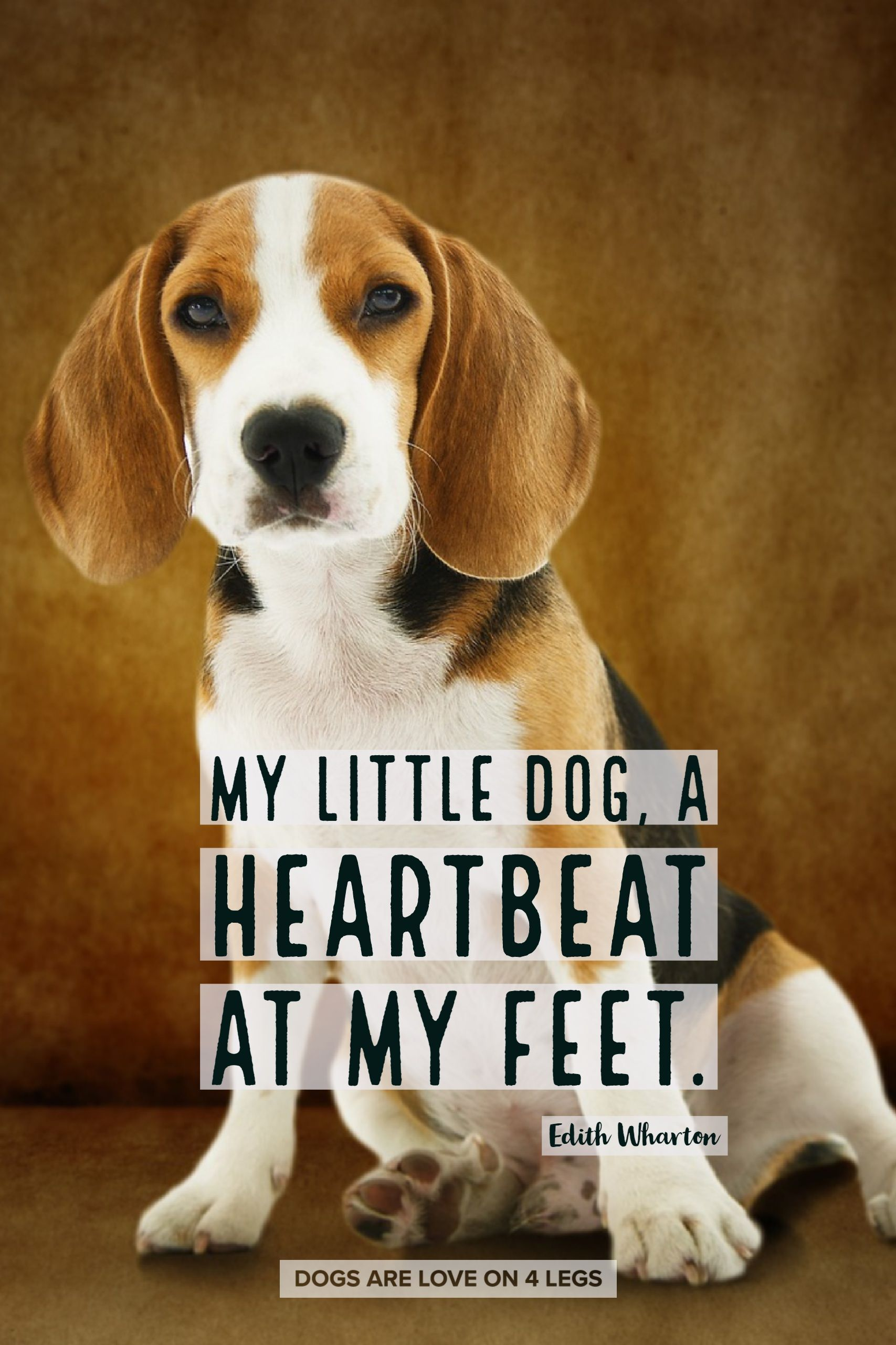 My Little Dog A Heartbeat At My Feet Dog Dog Quotes Inspirational Quotes Funny Quotes Life Quotes Dog Quotes Funny Dog Quotes Cute Dog Quotes