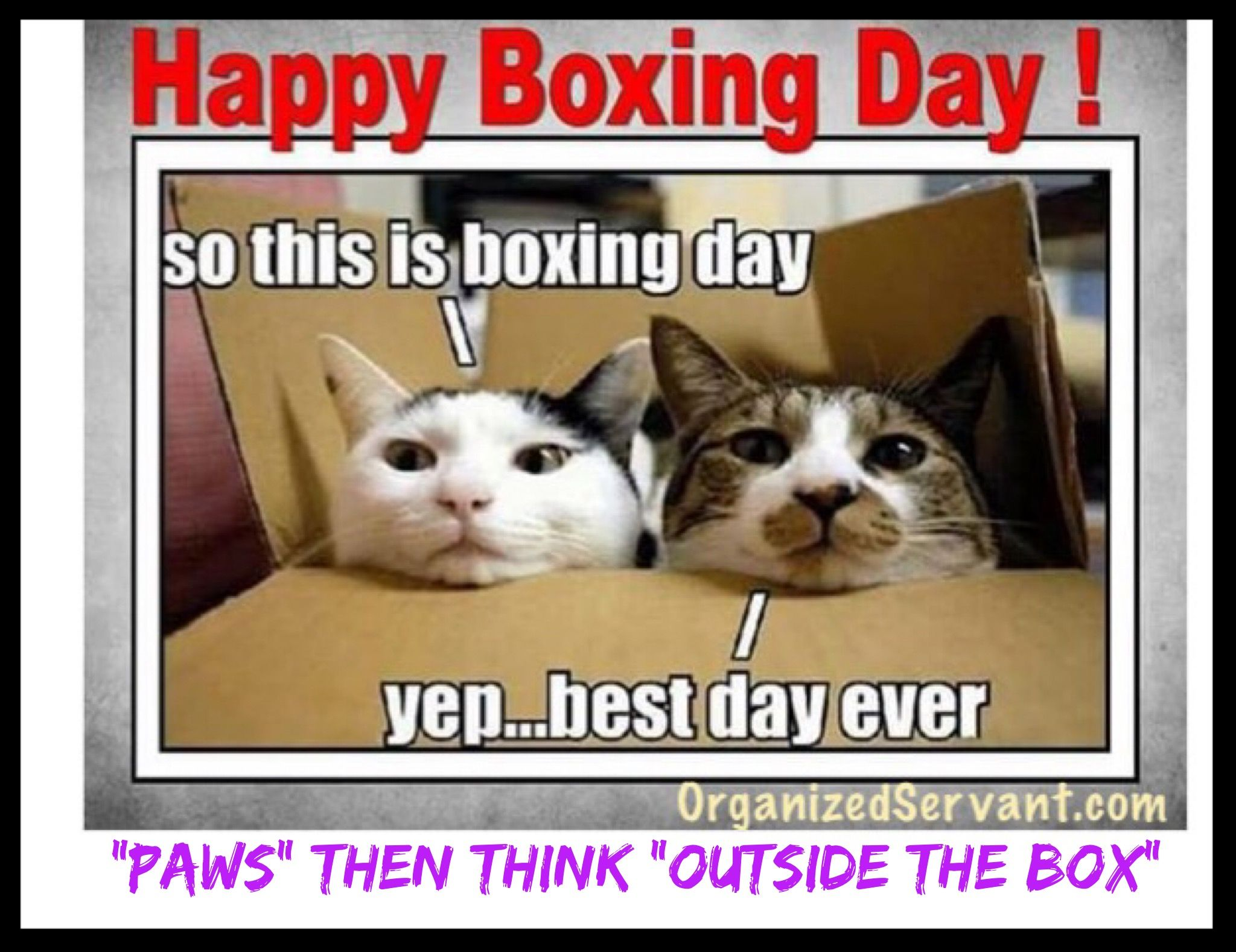 Happy Boxing Day Paws Then Think Outside The Box Organizedservant Com Cat Day Funny Cat Pictures Cat Drinking