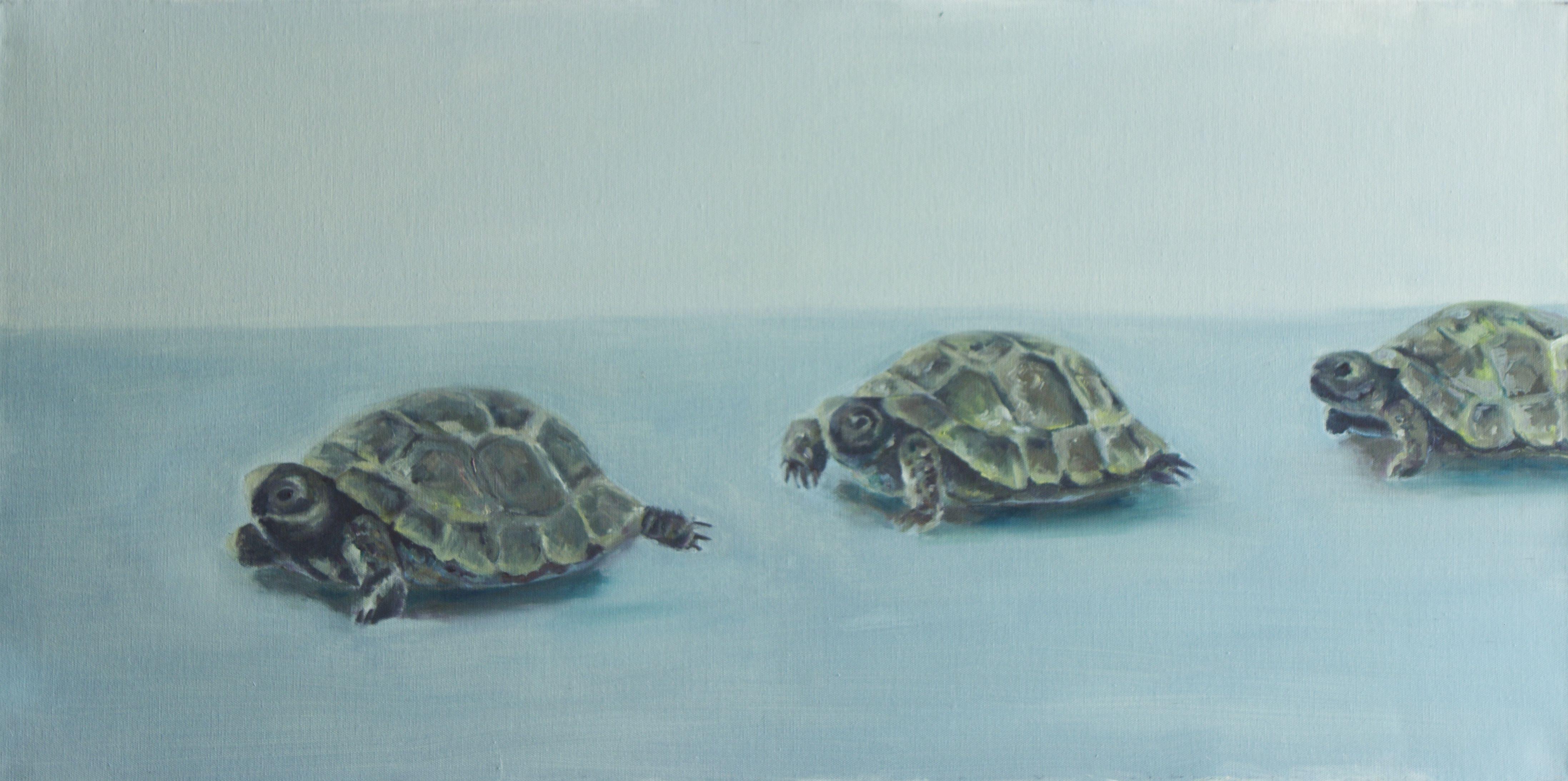 Schildkröten, oil on canvas, 50x100cm, 2010, available by artist: charlotte@vonelm.net