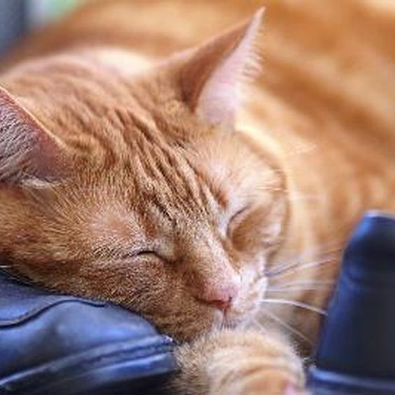 Keep your cat happy and healthy. Natural home remedies for