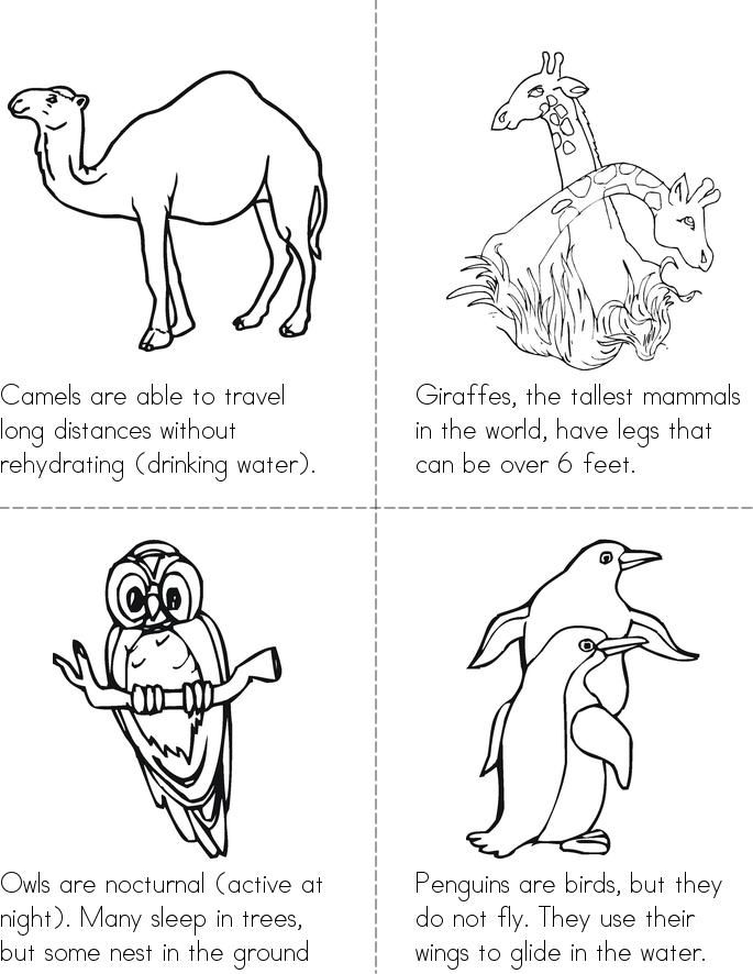 Animal Facts Book - Twisty Noodle | Animal facts, Fun ...
