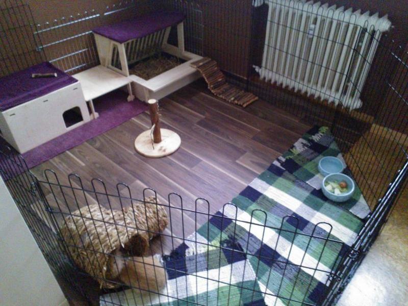 Wohnungshaltung Kaninchenhaltung, Kaninchengehege und
