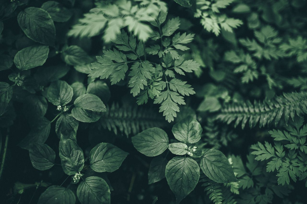 Plants Tumblr Pin By Pewdiepie On Nature Plant Aesthetic Slytherin