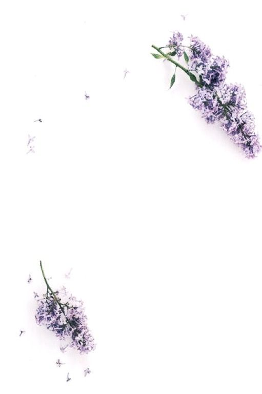 Purple Flowers On A White Background Flower Background Iphone White Iphone Background White Background Wallpaper