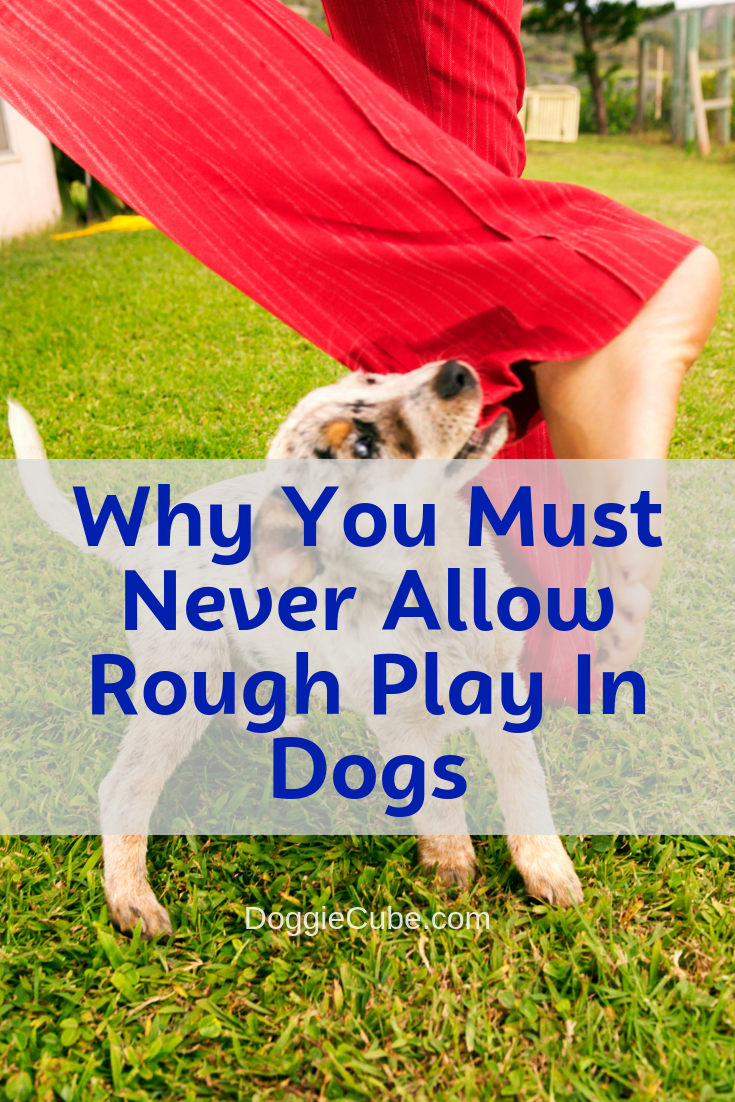 Why You Must Never Allow Rough Play In Dogs Doggie Cube Dog