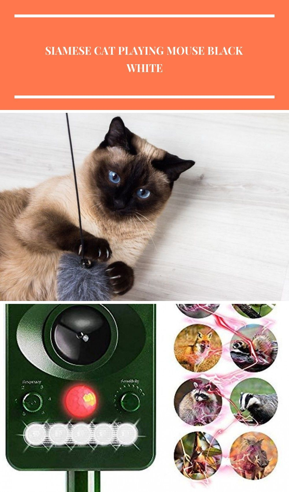 Siamese Cat Playing Mouse Black White  Siamese Cat  Ideas of Siamese Cat  Siamese Cat Playing Mouse Black White The post Siamese Cat Playing Mouse Black White appeared fi...