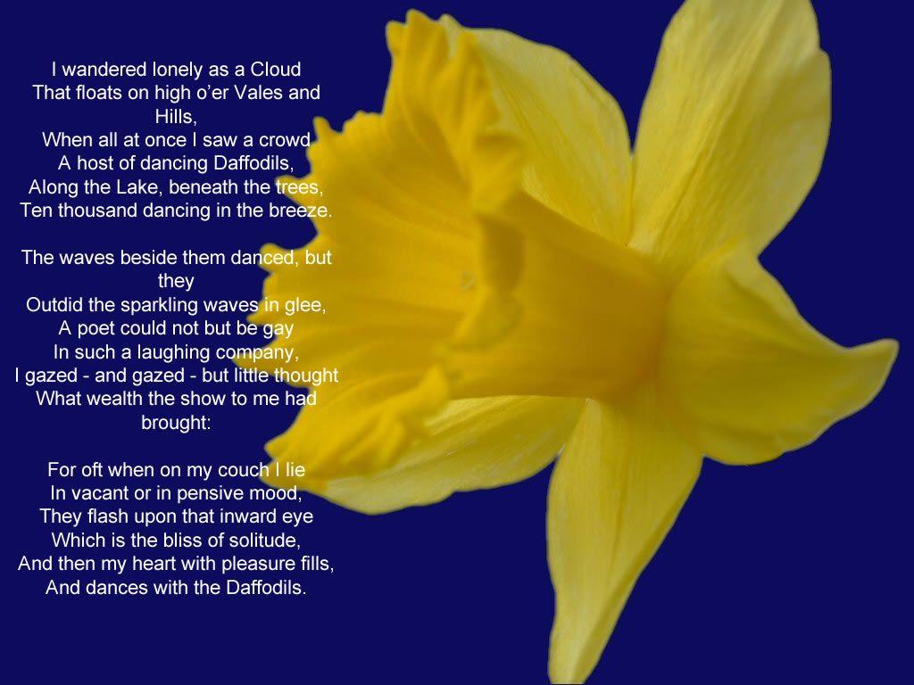 Gay as a daffodil