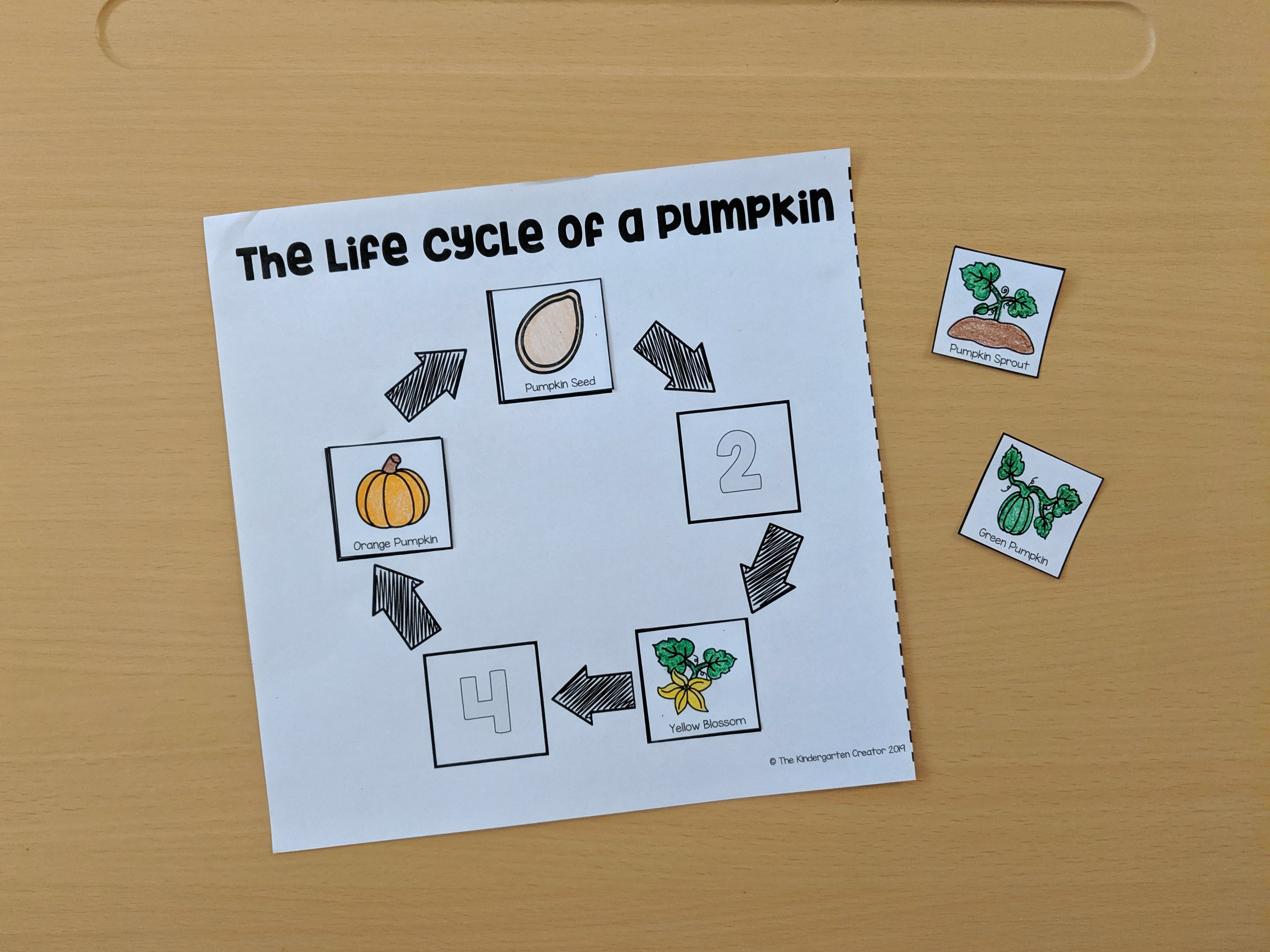 The Life Cycle Of An Pumpkin Sequence