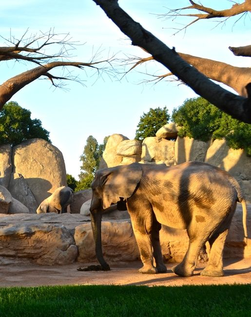 Bioparc Valencia an Amazing Zoo - Traveling Mom