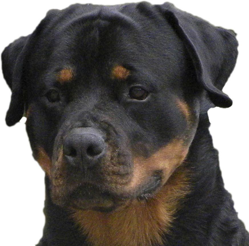 Los Angeles New York Rottweiler Dogs Animal Games