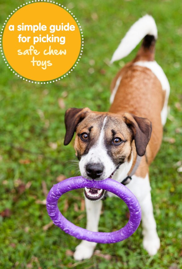 A Simple Guide To Picking Safe Chew Toys For Your Dog Pet