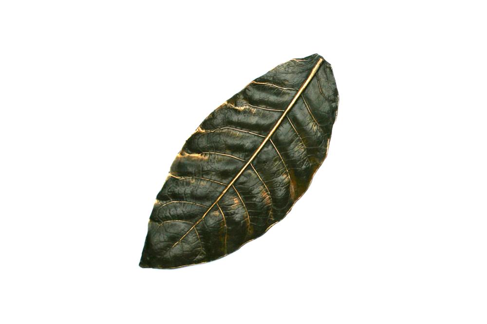 Tobacco Leaf Google Search Tobacco Leaf Plant Leaves Leaves