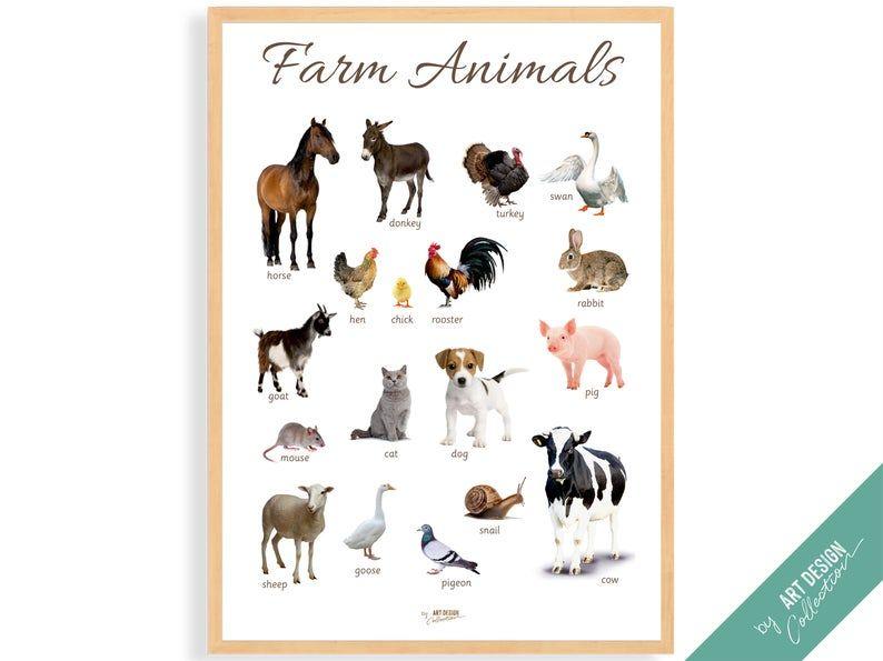 farm animals poster montessori poster