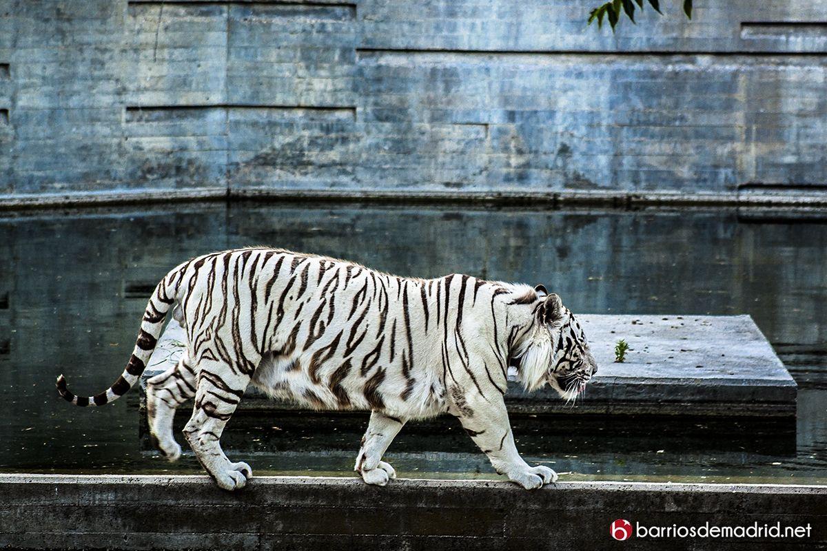 Fotografía De Madrid Barrios De Madrid Zoo De Madrid Ver Animales Barrios De Madrid