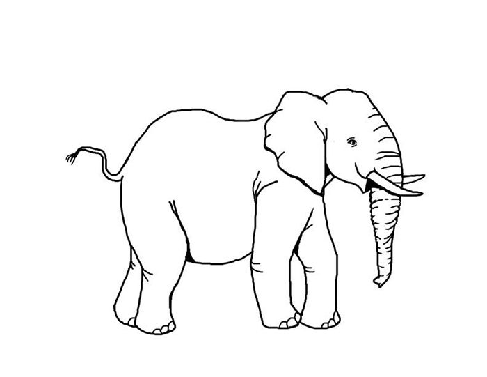 African Animal Template Shapes Crafts Colouring Pages Template
