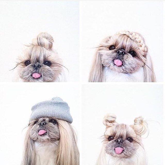 Who says only humans can do hairstyles? Haha so adorable #hair#braids#braid#beautiful#braidoftheday#instamood#instalikes#hairoftheday#hofd#bofd#instahair#instabraid#instafeed#braidsforgirls#braidstyles#hairstyles#cutegirls#cutebraids#cutehair#braidpictures#hairispo#hairstylesforgirls#ighair#igbraid#hairfashion#hairlovin#hairdo#dog#adorable