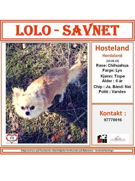 SAVNET : Hosteland, Hordaland (15.03.15)  NAVN : Lolo . . RASE : Chihuahua . . FARGE : lys . . KJØNN : Tispe . . ALDER : 6 år . . CHIP : ja . . KONTAKT : 97778016 . . HJERTEkontakt : Anne B : 92020142 og Lucia 992 68 386 . .  Kart : .Karthenvisning til Hosteland, Masfjorden, Hordaland: http://kart.kvasir.no/m/bLDKj . Følg denne annonsen her videre hos oss i  «Med Hjerte for Hunder på Rømmen»https://www.facebook.com/groups/729942270382489/permalink/900926793284035/