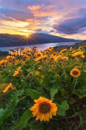 ภาพสวย ว ว ธรรมชาต ดอกไม สวยมาก Live Beautiful Nature Nature Photography Landscape