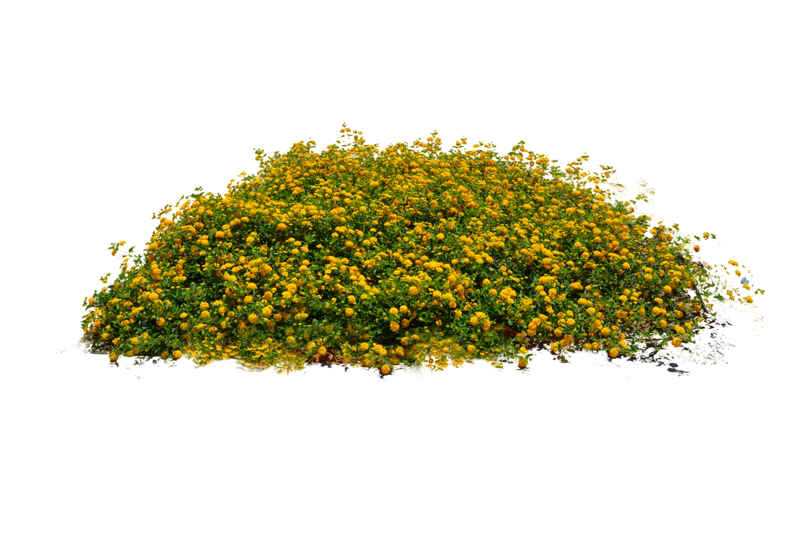 10 Plants & Flowers PNG Images (Free Cutout Plants) for