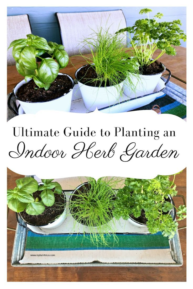 The Ultimate Guide On Growing An Indoor Herb Garden 400 x 300