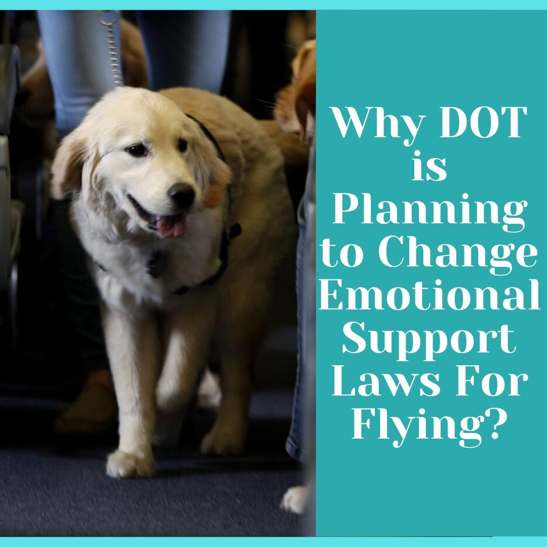 Why DOT is Planning to Change Emotional Support Laws For