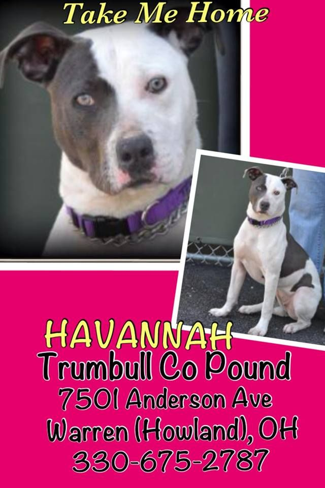 Pound Full This Is Beauty Girl Havannah Come Meet Her At Trumbull Co Pound 330 675 2787 Https Www Facebook Com Ph With Images Dog Adoption Animals Friendship Adoption
