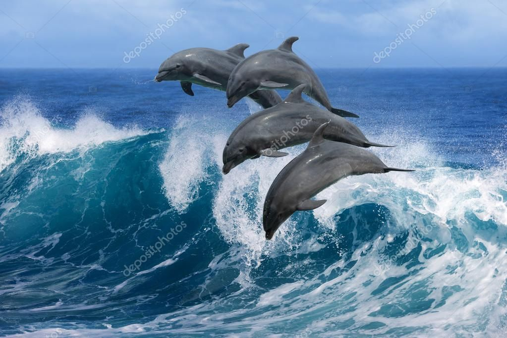 Image result for dolphins jumping thru ocean waves Wild