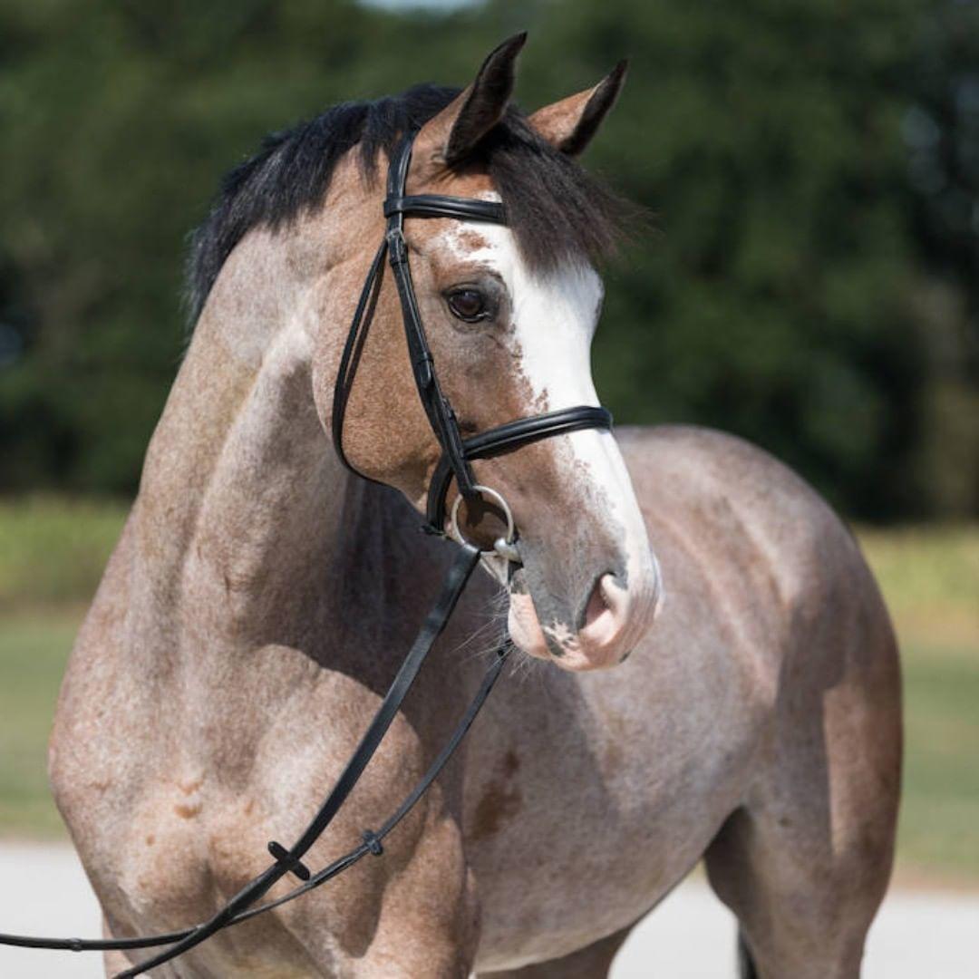 German Horse Center On Instagram New Internationally Placed