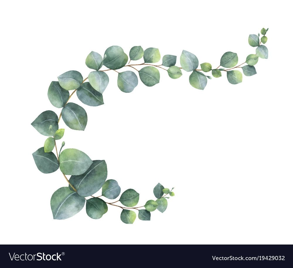 Watercolor Wreath With Green Eucalyptus Vector Image On Floral