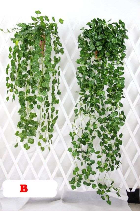 2 Bundle Artificial Ivy Leaf Garland Hanging Plants Vine Fake Foliage Flowers For Wedding Reception Decoration 47 inches MGT023 is part of Ivy Plant decor -  47 inches Types  Money Plant leaves  A                 grape leaves  B                begonia leaves  C                 pachyderms leaves  D                watermelon leaves  E  Generally it takes 920 days to US, 1030 days to Canada, United Kingdom, Austria, France, Germany  And other countries may take longer time from 3050 days, Please let us know if you need expedited shipping  Please contact us if there's any question )