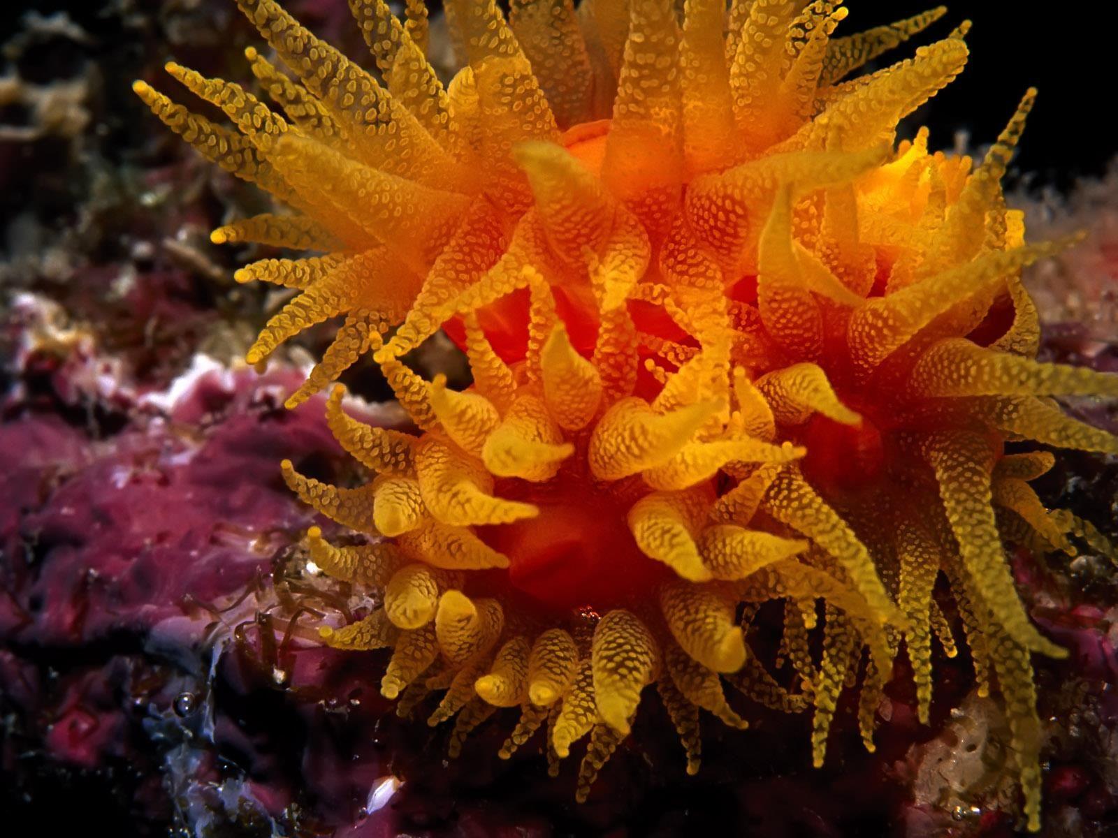 La Vie Sous Marine Fonds D Ecran Gratuits By Unesourisetmoi Belles Creatures De La Mer Creatures Des Oceans Vie Sous Marine