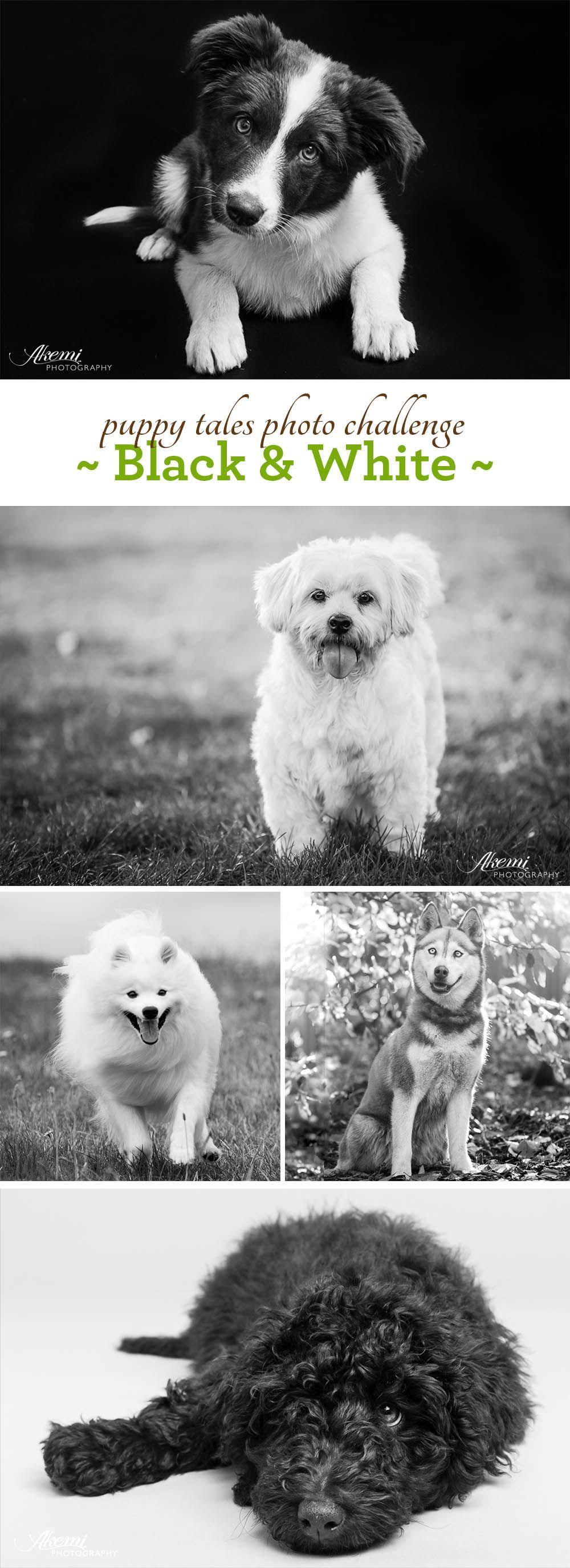 Dog photo challenge black u white dog