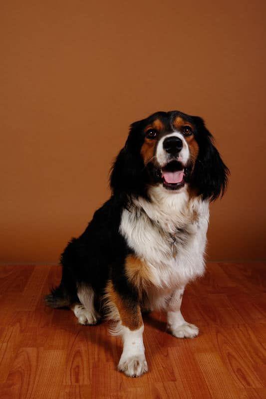Best Hardwood Flooring For Dogs Dog Pee Smell Dog Pee