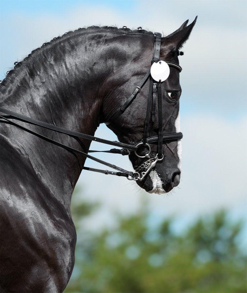 Dressage... - фотографии - Ксения Римская - конники - equestrian.ru