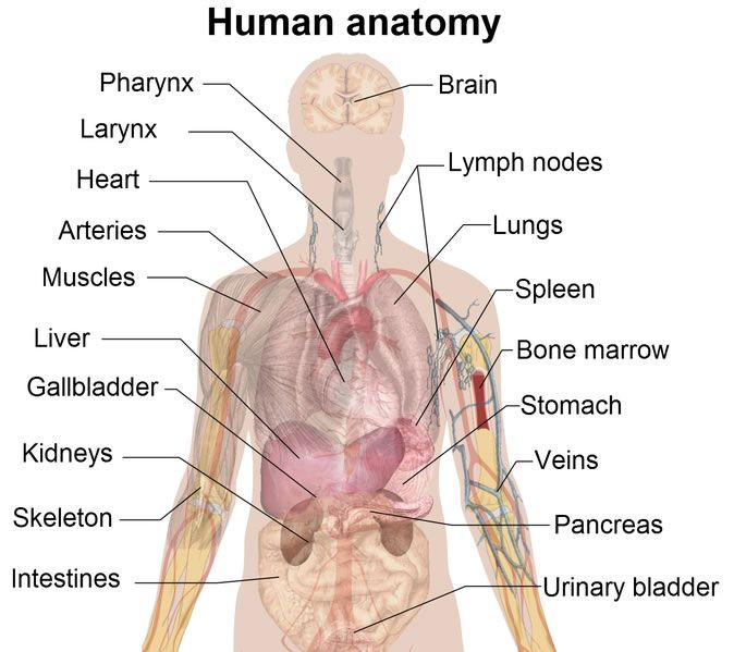 Knowing The Human Body Is Very Important To Know When Being A Nurse