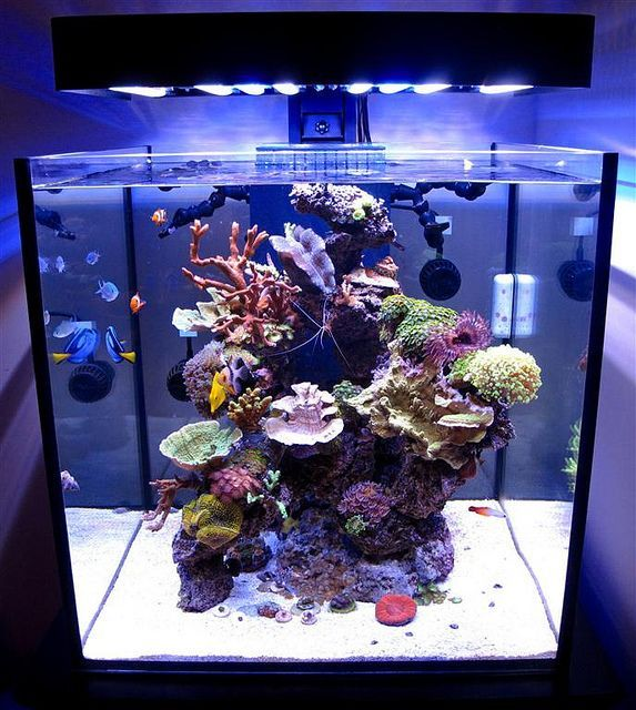 SolanaXL60 Aquarium Lit with PanoramaLEDFixture   Aquarium ...