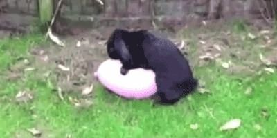 Bunny has sexy time