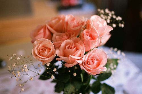 dream roses (color) for Valentine's Day <3