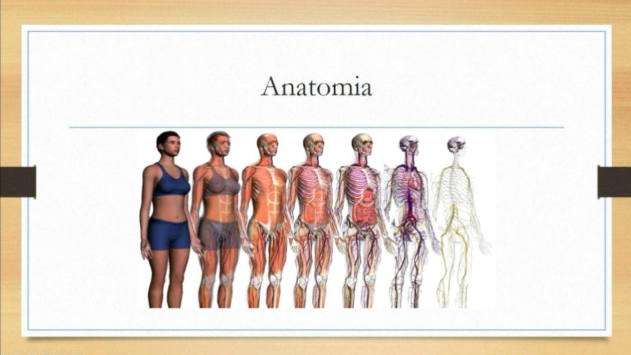 Vídeo sobre anatomía general del cuerpo humano y su divisiones ...