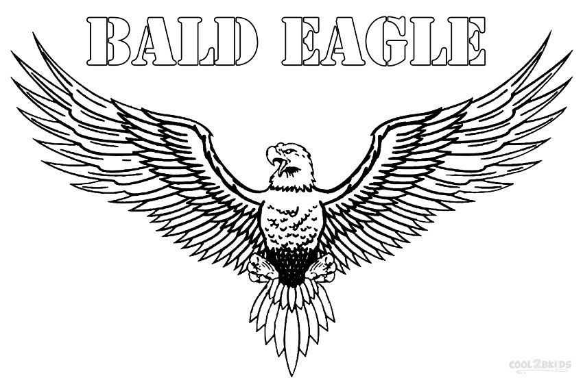 Printable Bald Eagle Coloring Pages For Kids Cool2bkids Color