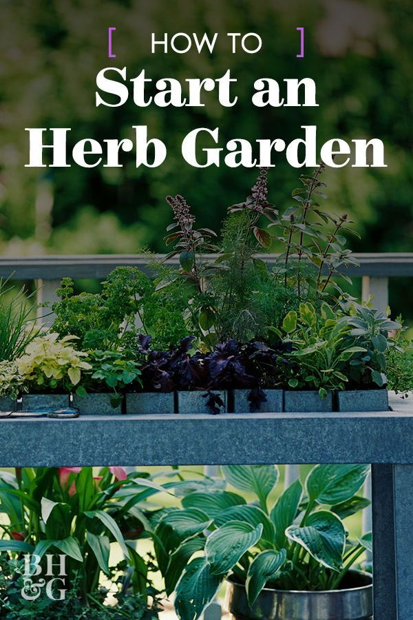 Here If You're Looking to Plant an Herb Garden You can grow herbs from seeds or from transplants found at your favorite nursery. Follow these herb garden tips and you'll be snipping fragrant and delicious herbs in a few weeks.You can grow herbs from seeds or from transplants found at your favorite nursery. Follow the...