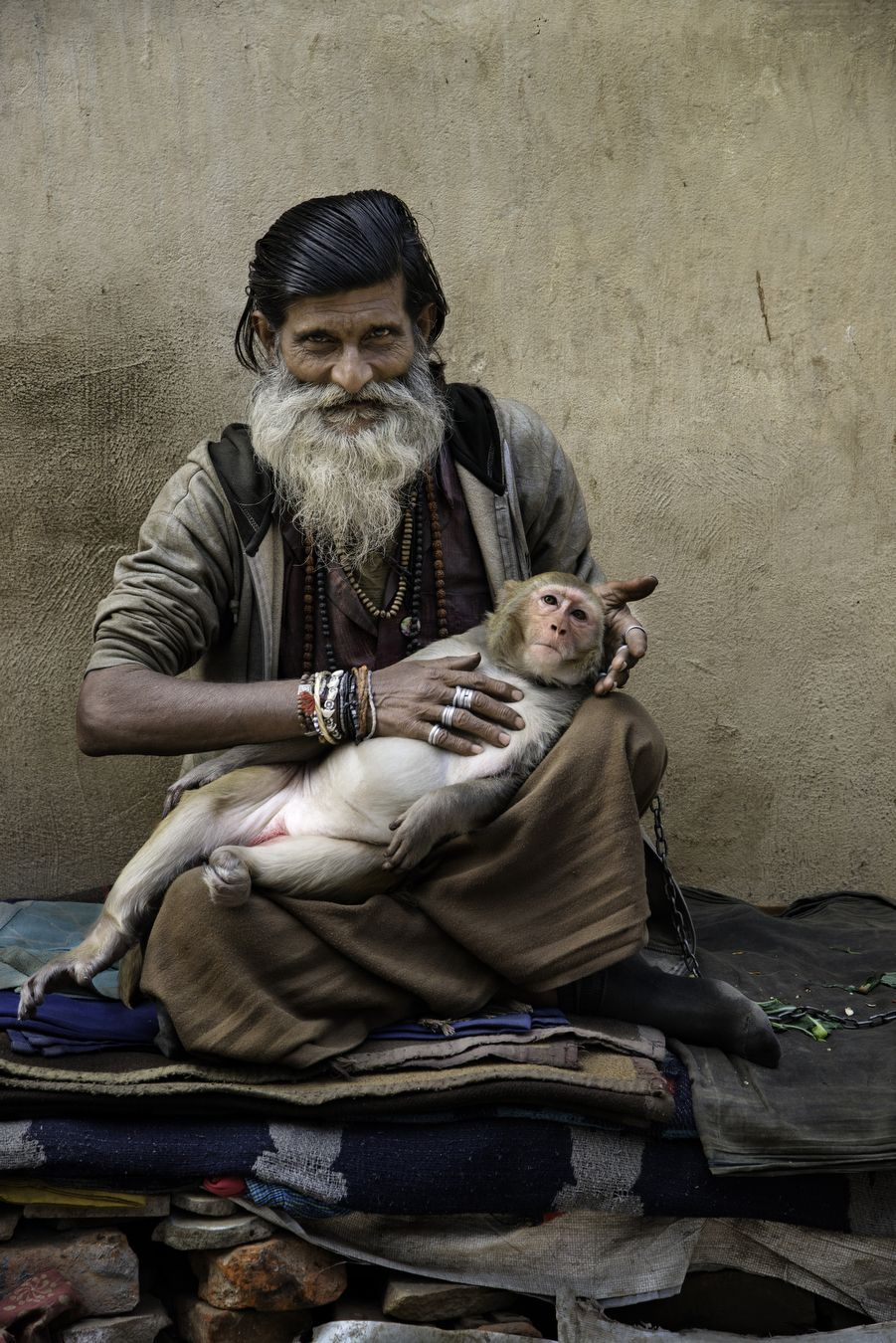 India All Creatures Great and Small  Steve McCurry  we