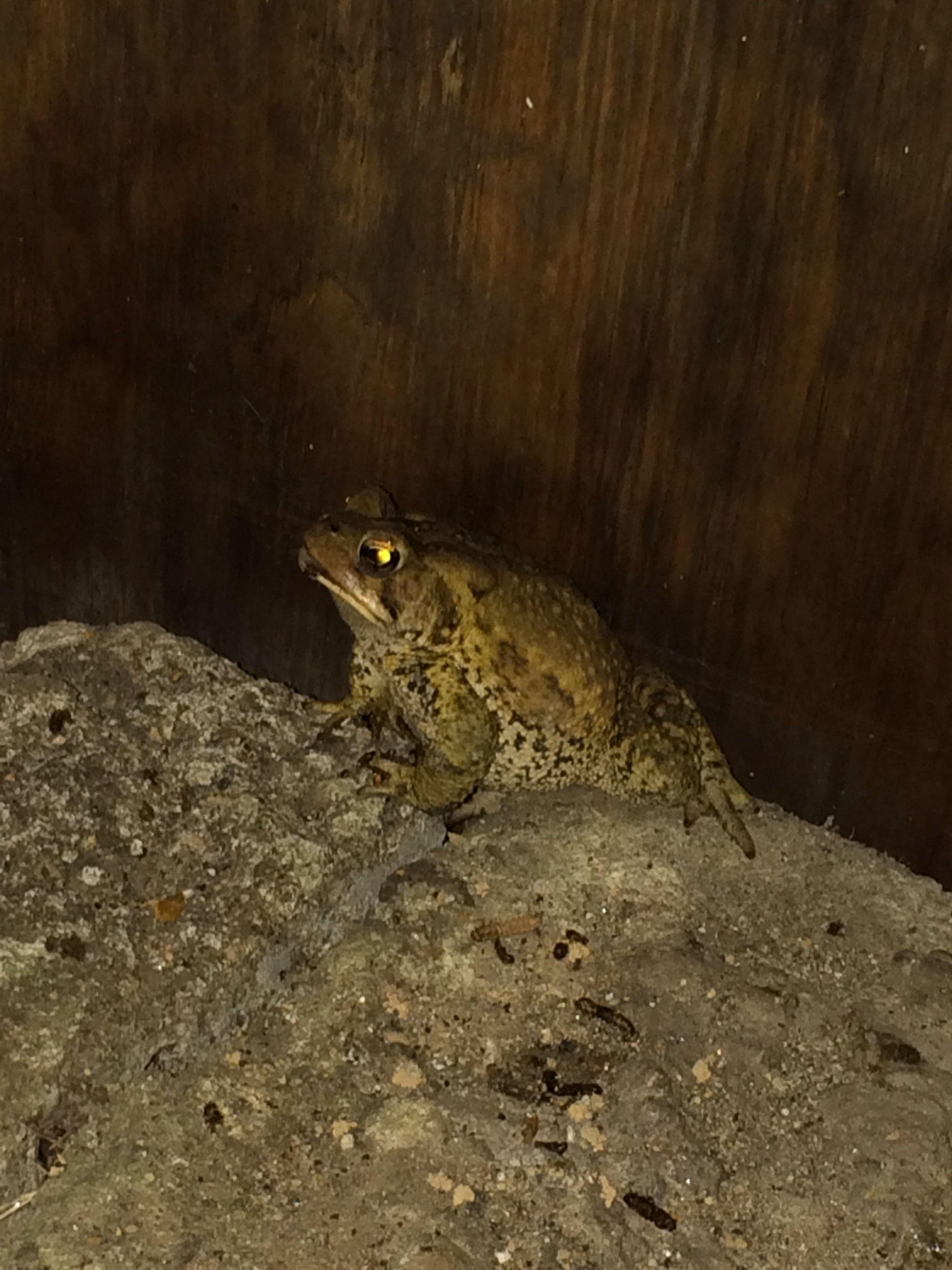 Night Frog...