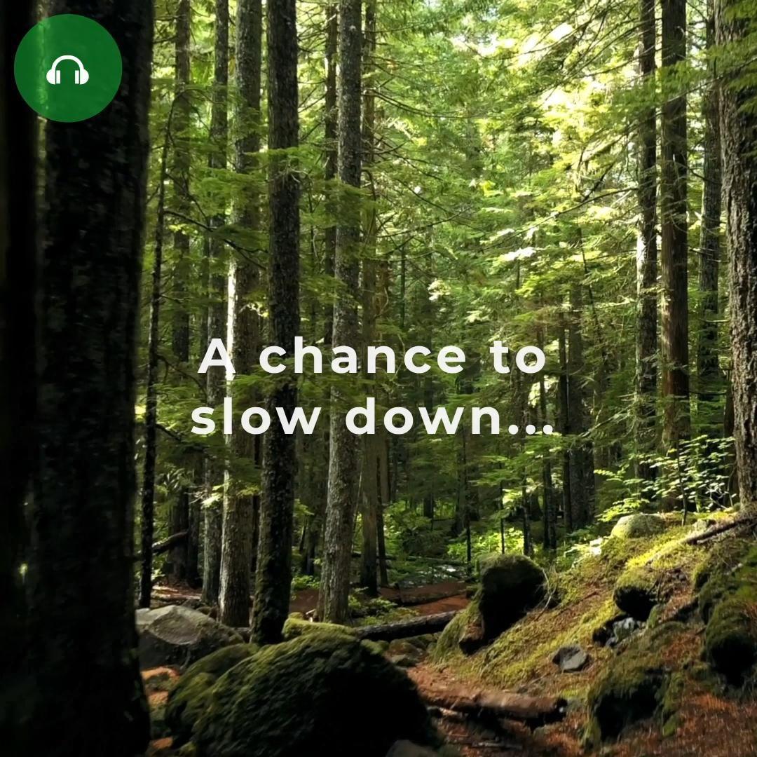 World Mental Health Day | Forest bathing